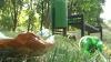 """Чиновники обвиняют отдыхающих в неухоженности парка """"Долина Роз"""""""