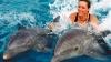 Память дельфинов превзошла ожидания американских ученых