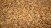 Руководитель фирмы присвоила незаконно более 900 тонн пшеницы из госрезерва