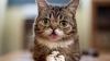 В Сети состоится премьера документального фильма о знаменитых кошках (ВИДЕО)