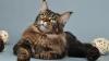 Сотни кошек ведут борьбу на столичной выставке за звание самой красивой