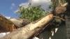 В Шолданештском районе 10-метровое дерево упало на жилой дом