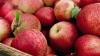 Россия забраковала 60 тонн молдавских яблок