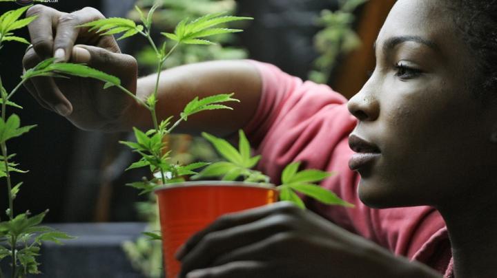В Вашингтоне откроют более 330 точек продажи марихуаны