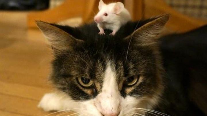 Как мыши избавляются от страха перед кошками