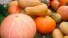 Осенью тыква пользуется большим спросом на столичных рынках