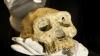 Древние черепа из Грузии могут переписать историю происхождения человека