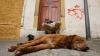 В Чили бездомных собак приняли на городскую службу
