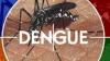 В Парагвае 241 человек скончался от лихорадки денге