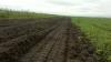 Сельхозпроизводители получат 16 млн леев на компенсации ущерба от стихийных бедствий