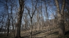 Шестьсот гектаров леса в Новых Богенах восстановлены на европейские деньги