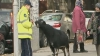 Дорогу протестующим у Дворца республики коммунистам преградили две козы