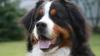 На Moldexpo проходит международная выставка собак