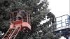 Столичная мэрия нашла ёлку, которую установят в центре Кишинёва
