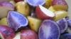 Селекционеры вывели новые сорта картошки с разноцветной мякотью