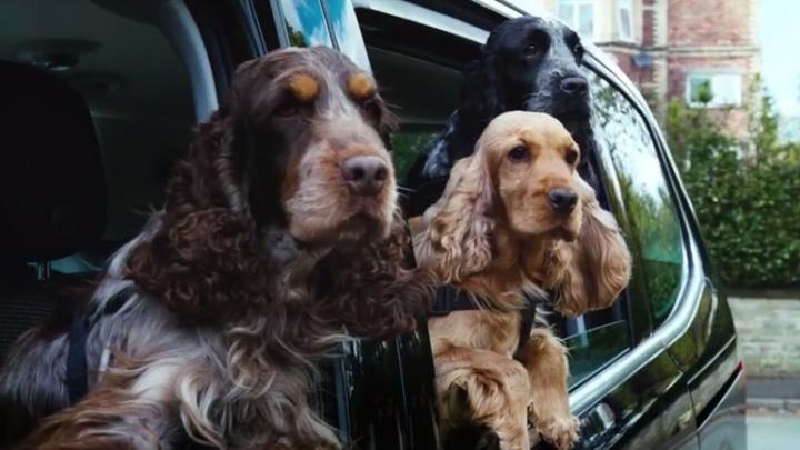 Volkswagen подобрала собаку каждому автомобилю в своей линейке (ВИДЕО)