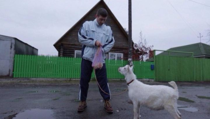 Героиней клипа Limp Bizkit стала коза из Новосибирска