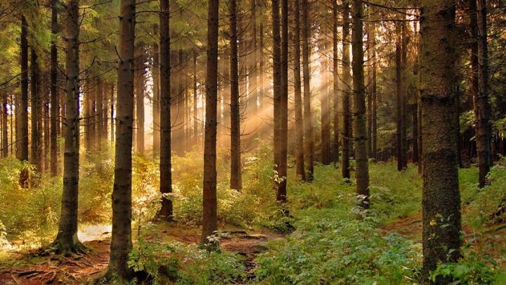 Российские ученые создали электростанцию для подзарядки гаджетов в лесу