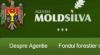 Счётная палата выявила множество нарушений в работе агентства «Moldsilva»