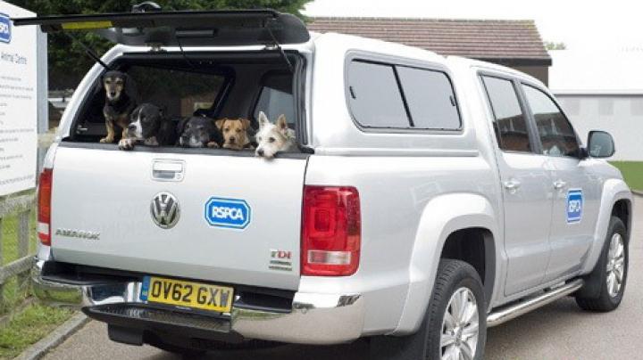 Пикап Volkswagen Amarok спас более 1200 животных