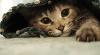 Итальянскому врачу KFOR грозит год тюрьмы за спасение кошки