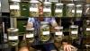 На прилавках магазинов в Колорадо впервые появилась марихуана