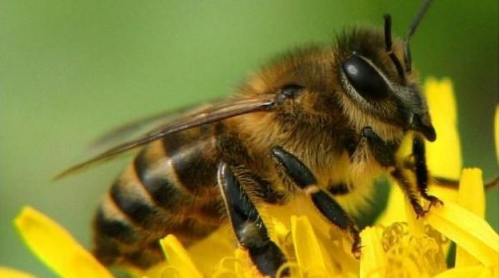 Американский штат заполонили пчелы-зомби