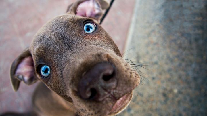 Ученые выяснили, что все собаки происходят от одного общего предка
