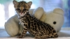Француза приговорили к году тюрьмы за издевательства над котенком