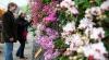 В Ботаническом саду Нью-Йорка открылась ежегодная выставка орхидей