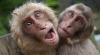 В столичном зоопарке начался, своего рода, любовный период
