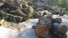 Между экологами, местными жителями и властями возник спор из-за массовой вырубки деревьев в парке на Рышкановке