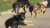 Бездомные собаки из Сочи попали в приют для животных в Вашингтоне
