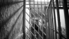 После 19 лет заключения мужчина из Единецкого района пошел на новое преступление