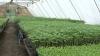 Овощная и цветочная рассада может стать выгодным бизнесом