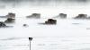 Сильная снежная буря бушует на восточном побережье Соединенных Штатов