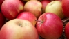 Молдова поставила на российский рынок рекордный объем яблок