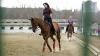Кишиневский зоопарк предлагает желающим уроки верховой езды