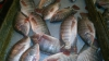 В Вербное воскресенье рыба пользуется наибольшим спросом у покупателей