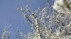 На юге Молдовы 23 апреля до 25 градусов тепла