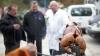 ЕС подал на Россию в суд ВТО из-за запрета на свинину