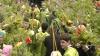 Во всех церквях страны прошли праздничные богослужения и освящения ветвей вербы