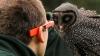 """С помощью очков Google Glass больные дети """"посетили"""" зоопарк (ВИДЕО)"""