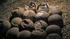В Китае обнаружили окаменевшие эмбрионы неизвестных динозавров