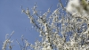В Молдове 7 мая потеплеет, в столице до +18