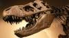 Окаменевшие кости самого большого динозавра обнаружили в Аргентине