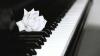 """В Органном зале пройдёт фестиваль """"Фортепианные ночи"""""""