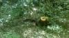 В Единецком районе выявлена незаконная вырубка деревьев
