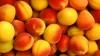 В продаже уже есть абрикосы из молдавских садов