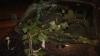 На Ботанике ветка тополя рухнула на два автомобиля